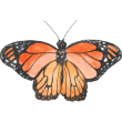 Kallimos Logo
